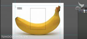 Tạo thước khi sử dụng mesh tool trong illustrator
